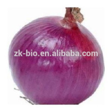 100% puro antioxidante natural ayudar a la digestión Extracto de cebolla