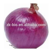 Extrato de cebola 100% puro natural anti-oxidante ajuda digestão