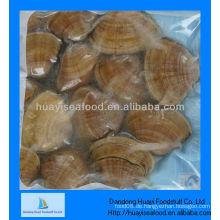 Gefrorene gelbe Muschel