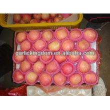China rojo precio fresco manzana fuji
