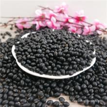 nueva cosecha Big Black Beans