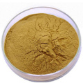 GMP factory supply high quality pure nature Holy basil extract , Holy basil extract powder
