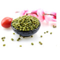 Venta al por mayor de Bean Green Bean / round bean, tipo de brotación
