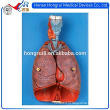 Modelo ISO Laringe, Coração e Pulmão