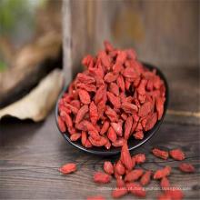 fábrica de frutas secas da china secas sementes de goji orgânico