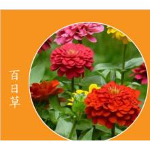 Best quality and factory for Flower Seeds Flower seed germination temperatures export to Sri Lanka Manufacturers