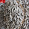 2017 new sunflower seeds kernels
