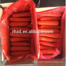 Export fresh carrot of cold container carrot