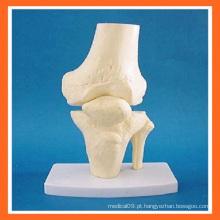 Joelho de simulação anatômica Modelo de esqueleto articular do joelho para ensino médico