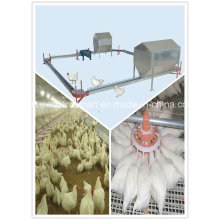 Poultry Farm Equipment of Breeder Chain Feeding System