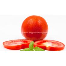 Polvo de jugo de tomate
