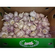 Hot Sale Normal White Garlic