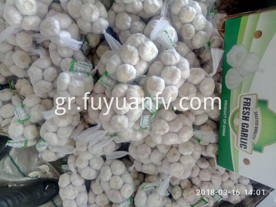 Normal white Garlic 5.0-5.5