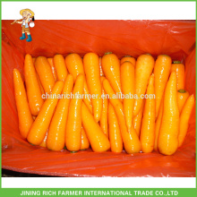 2016 Frische rote Super-Qualität Karotten zu weltweit bei einem guten Preis & leckerer Geschmack