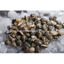 Frozen Baby clam in shell vacuum pack