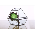 Forma Super Large Glass Terrarium Geometric