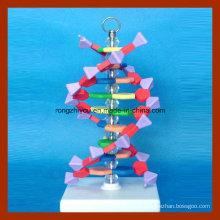 Pequeño modelo de estructura de doble hélice de ADN para la enseñanza en la escuela