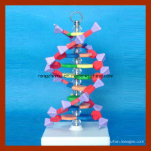 Small DNA Double Helix Structure Model for School Teaching