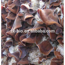 High quanlity Dried Auricularia Polytricha Mushrooms