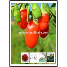 2016 neue Zertifizierte Bio Getrocknete Goji Beeren 2016 Neue Zertifizierte Bio Getrocknete Goji Beeren Spezifikation
