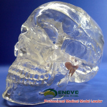 SKULL09 (12335) Medical Science Classic Life Size Transparent Humans Skull, Anatomical Skull Model