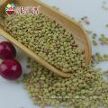 Neue Ernte chinesische getrocknete grüne Linsen