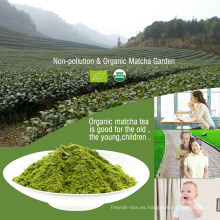 Ceremonia japonesa Grado Matcha Wholesale