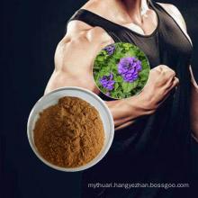 Best Price Ajuga Turkestanica Extract 2% Turkesterone Powder