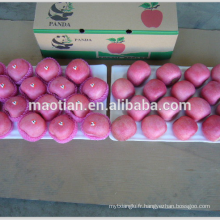 Fuji Apple Factory Chine