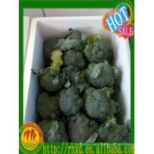 2015 China fresh broccoli