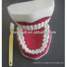 Nuevo modelo de cuidado médico dental modelo, modelo de dientes