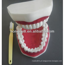 Modelo de Cuidados Dentários Médicos de Estilo Novo, modelo de dentes