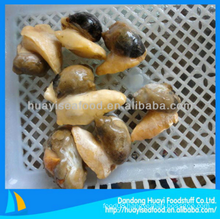 delicious frozen tasty better quality whelk meat fast delivery