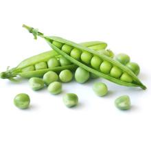 Sweet  Asparagus vegetable green pea seeds