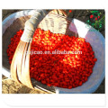 Muestra gratuita bayas de goji congeladas semilla goji berry precio Muestra gratis bayas congeladas goji semilla goji berry precio Especificación