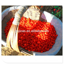 Free sample frozen goji berries seed goji berry price  Free sample frozen goji berries seed goji berry price  Specification
