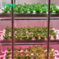 Indoor Vertical Hydroponics system for vegetables with Led Grow Light
