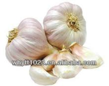 Lower blood sugar 30%-60% UV Garlic polysaccharide