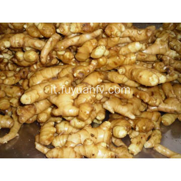 Fresh Ginger to Kiwait market