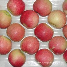 Профессиональный поставщик свежего красного гала-яблока