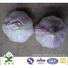 Ajo rojo de la piel (ajo blanco normal) Nueva cosecha 2016 de China
