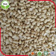 Kernels de Amendoim com Tamanho Grande