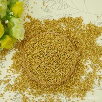 2016 neue Ernte gelbe Hirse in Schale für Reis Großhandel