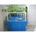 Home Hydroponic System For Growing Strawberry