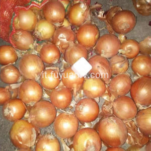 New Crop Fresh Yellow Onion on Sale