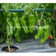 Р31 Lvwen ранней зрелости большой размер гибрид зеленого перца семена