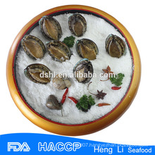 Bqf frozen abalone with cheap price