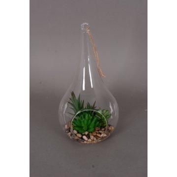 Mélanger des succulentes pour la décoration de maison et de bureau en verre suspendu avec emballage Saft (18-HF3903)