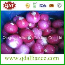 Fresh Purple Red White Onion with None GMO