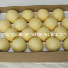 Export Standard Chinoise Nouvelle Courbe Couronne Poire